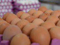 Yoğun ilgi kahverengi yumurtanın fiyatını uçurdu