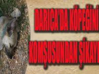 Darıca'da Köpeğini Vuran Komşusundan Şikayetçi Oldu