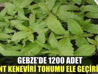 Gebze'de 1200 kök hint keneviri ele geçirildi!