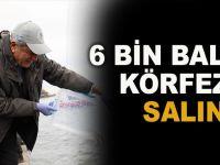 6 bin balık körfeze salındı