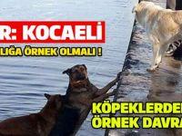 Köpek denize düştü, peşinden atlayan diğer köpek onu kurtardı!