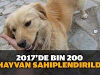 2017'de 1200 hayvan sahiplendirildi