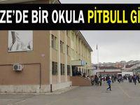 Gebze'de bir okula pitbull girdi!