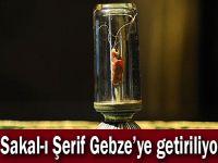 Sakal-ı Şerif Gebze'ye getiriliyor
