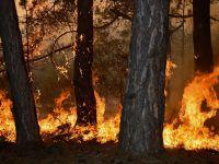 Az daha koca ormanı yakıyorlardı…