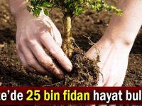 Gebze'de 25 bin fidan hayat bulacak