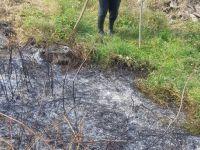 Tarlasındaki çalıları tutuştururken koca ormanı yaktı!