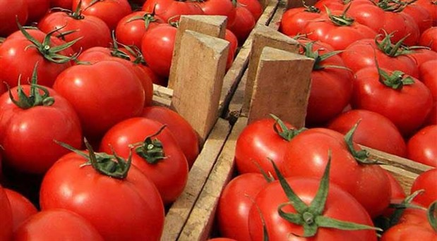 neredeyse-giden-her-domates-geri-gonderiliyor-domates-korkusu-583840-5.jpg