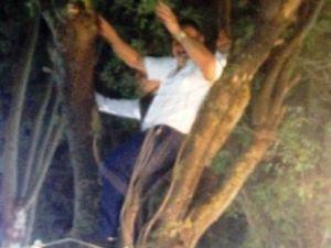 Alan dar olunca, ağaçta oynadılar