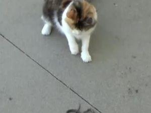 Kedi Yılanla Karşılaşırsa
