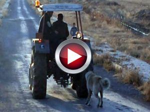 Köpeğini traktörün arkasına bağlayıp...